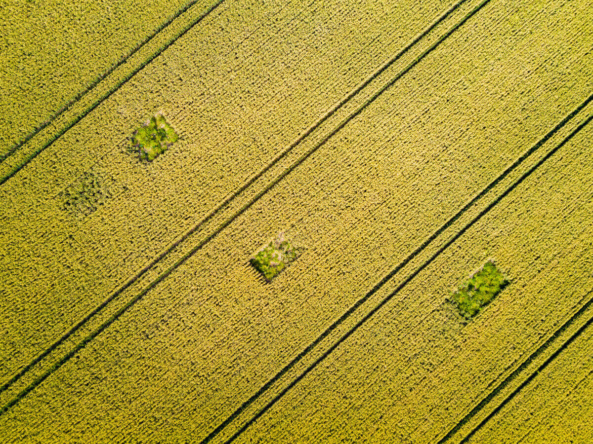 Patterns left in the fields by heavy machinery